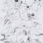 """Upstarts - pencil on paper · 8"""" x 6.5"""" - Sold"""