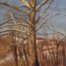 "The Big Sycamore - 12"" x 9"", Oil on birch"